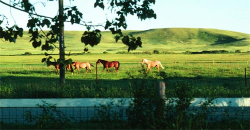 Pastured horses and Montana benchland